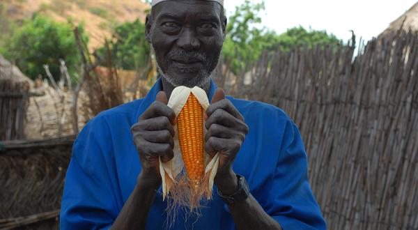 Bauer mit Mais