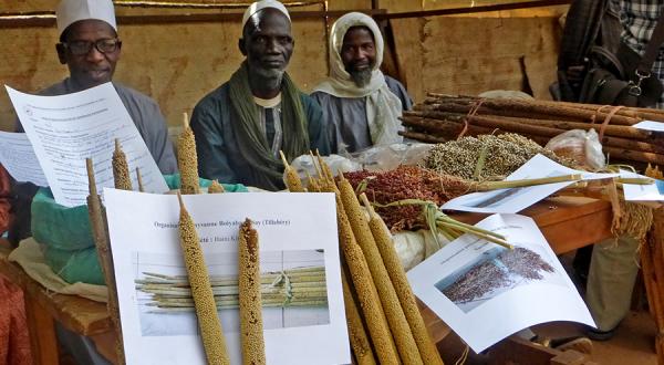 Bauern vor ihrem Mais.